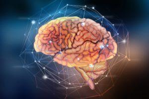 redes neurales